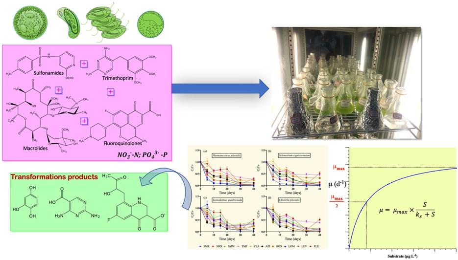 Analysis of the degradation characteristics of microalgae on antibiotics