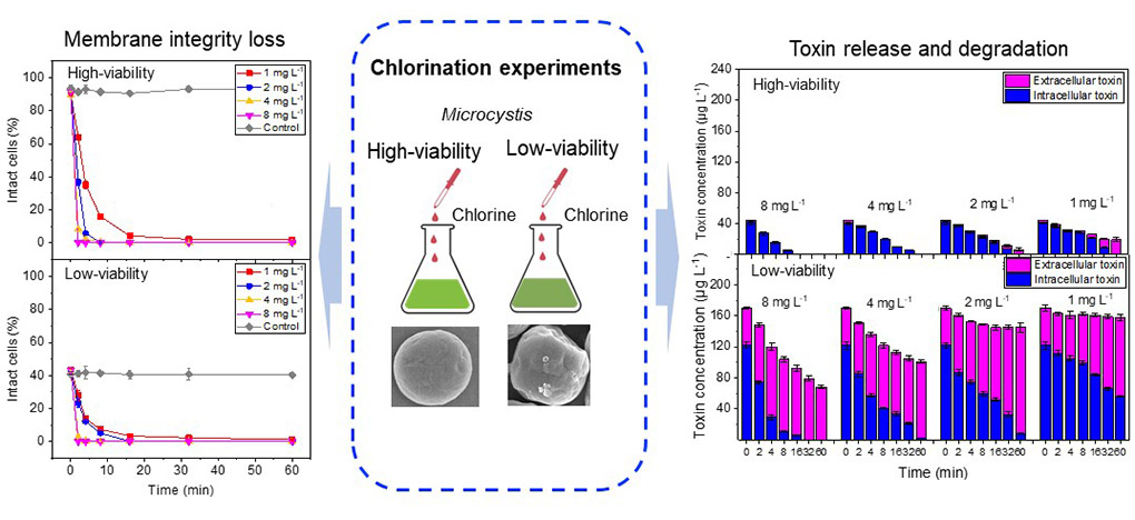 Progress in chlorination of high / low activity cyanobacteria cells in the urban environment
