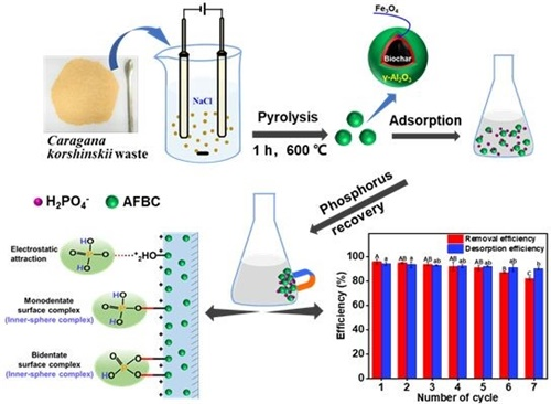 Development of biochar-based magnetic adsorbent and phosphate adsorption mechanism