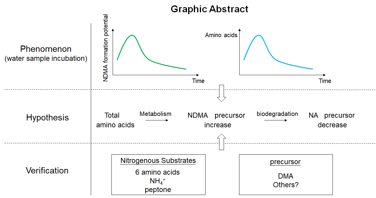 The basic process of nitrosamine precursors produced by microorganisms metabolizing nitrogen-containing substances in water